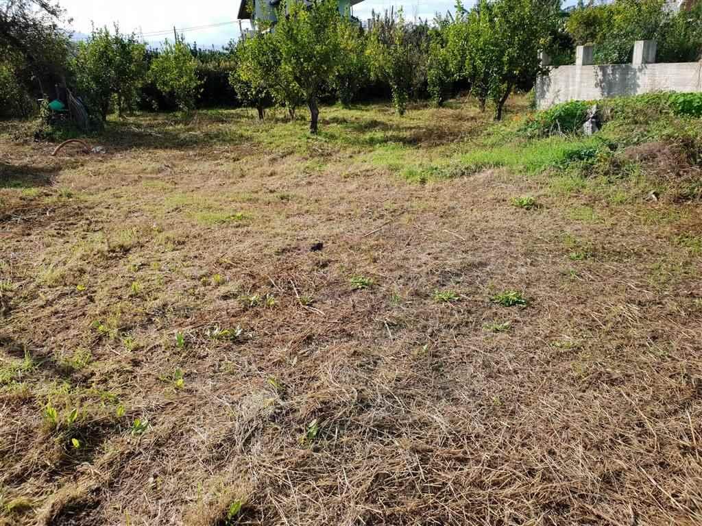 49 – Terreno agricolo a CAPO D'ORLANDO